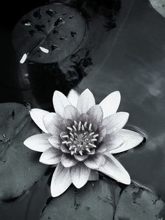 Water Lily by moooo73, via Flickr   #monochrome #green  #flower  #iphoneography