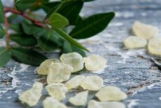 Mastic Gum Mastiha Masticha Large Fresh Natural Tears of Greek Chios Island The Kitchen Food Network, Mastic Gum, Simple Minds, Chewing Gum, Greek Recipes, Sugar And Spice, Food Network Recipes, Cooking Tips, Natural Remedies