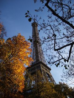 Paris in Autumn  Paula Beard
