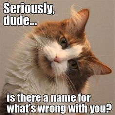 whats wrong with you funny quotes quote cat lol funny quote funny quotes humor Cat memes - kitty cat humor funny joke gato chat captions feline laugh photo Funny Shit, Funny Animal Memes, Funny Cute, Funny Animals, Cute Animals, Funny Memes, Funniest Animals, Funny Pics, Cats Funny Sayings