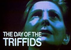 """The Day of the Triffids (1962). Sci-fi/horror  film based on the novel by John Wyndham. Tall plants capable of aggressive and seemingly intelligent behaviour that are able to move about by """"walking"""" on their roots, appear to communicate with each other. They possess a deadly sting that enables them to kill their victims and feed on their rotting carcasses. It was directed by Steve Sekely, (Rank UK)"""