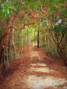 Nature Trail, Shallotte NC....these trails would so cool to time run...=)