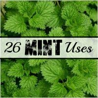 26 Uses for Mint: Health, Beauty, in the garden and more