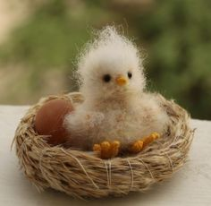 Baby Chick by elisa