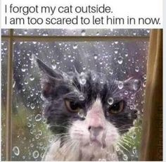 WEATHERMAN - LOLcats is the best place to find and submit funny cat memes and other silly cat materials to share with the world. We find the funny cats that make you LOL so that you don't have to. Silly Cats, Cats And Kittens, Cute Cats, Animals And Pets, Funny Animals, Cute Animals, Cats Outside, Angry Cat, Funny Cat Memes