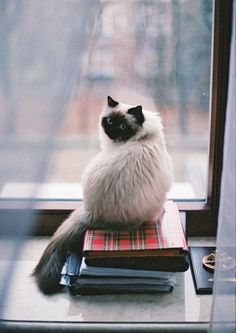 What? No, I don't know where your books are! Go away! lol