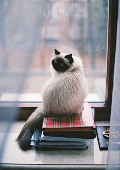 cat <3