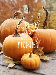 Autumn Quote Pumpkins