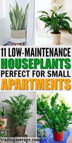 Do you need houseplants for your apartment? Here are 11 indoor plant options for small apartments that are low maintenance and do not need a log of sunlight! #Houseplants #IndoorPlants Hydroponic Gardening, Organic Gardening, Gardening Tips, Vegetable Gardening, Indoor Gardening, Hydroponics, Container Gardening, Indoor Plants Low Light, Small Indoor Plants