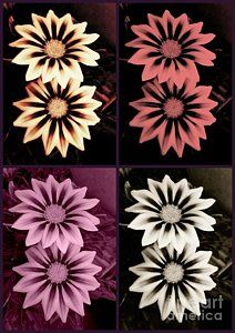 Gazania Collage Greeting Card for Sale by Erika H. Our premium-stock greeting cards are x in size and can be personalized with a custom message on the inside of the card. All cards are available for worldwide shipping and include a money-back guarantee.