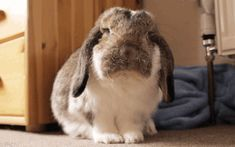 Inspiring animated gif rabbit, cute, gif, animal #1618648 by aaron_s - Resolution 400x250px - Find the image to your taste