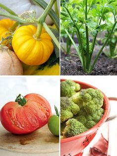 Grow your own vegetable soup
