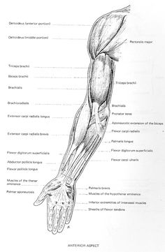 Figure Drawing and Anatomy: April 2011