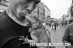 FOTONOESIS: Sueño Reptil