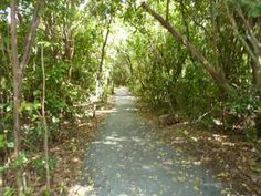Top 10 Activities to Enjoy During Your Visit to Everglades National Park: Gumbo Limbo Trail