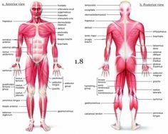 Mini Handbooks: Skeletal Muscle Group I