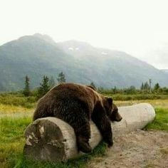Ohh relax nap time  Follow @about_animalslife for more cute animals photos and videos @about_animalslife #Wildgeography