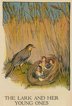 Aesops Fables by Milo Winter. 1919. 'The lark and her Young Ones'