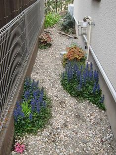 Green Garden, Tropical Garden, Shade Garden, Pebble Mosaic, House Entrance, Back Gardens, Flower Beds, Ikebana, Backyard Landscaping