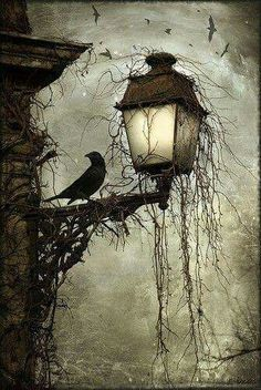 Crow on lamp post at night Dark creepy old London gothic feel. Love the hanging moss and carrion's circling in the back Arte Obscura, Crows Ravens, Arte Horror, Oeuvre D'art, Dark Art, Dark Gothic Art, Gothic Artwork, Gothic Fantasy Art, Cool Art