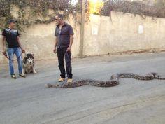 Good snake !! LOL