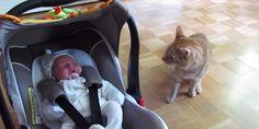 初めて見た人間の赤ちゃんの前にして戸惑うネコ - http://naniomo.com/archives/2928