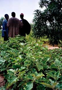 Yes, Africa can feed itself--through a sustainable agriculture revolution