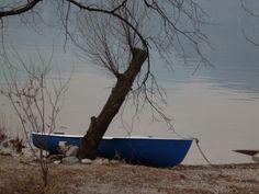 barca e albero