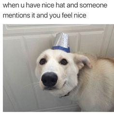 Nice Hat Time ? http://Stopwatch.OnlineClock.net #Dog #Dogs #DogLovers #FunnyAnimals #DogHats #Hats #Compliments #AnimalLovers #Animals #Pets #DogsOfInstagram #InstaDogs #DogsOfInsta #DogstaGram #DogSelfie #DogsOnInstagram