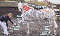 Wow this is great! She paints on the horse to help you understand how it moves!