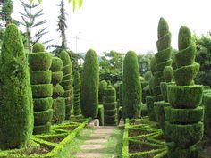 16 Marvellous Topiary Ideas