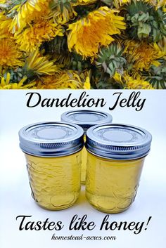 Dandelion jelly is simply amazing! It tastes just like honey with a hint of lemon. We just love this on toast, biscuits and even as a sweetener for herbal teas! Dandelion jelly is simply ama Dandelion Jelly, Dandelion Wine, Dandelion Uses, Dandelion Recipes, Home Canning, Canning Tips, Pressure Canning Recipes, Easy Canning, Medicinal Plants