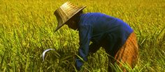 Biodiversity and Food Security – From Trade-offs to Synergies