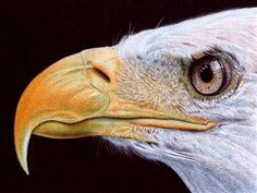 That's not a photo? Amazing artworks done with ballpoint pen - TODAY Entertainment