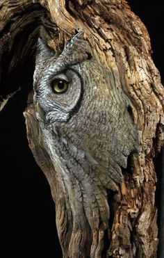 More owl camouflage.