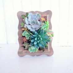 This small garden measures 6x9. Made from a reclaimed vintage style wood scroll picture frame. Designed with a few choice succulents. Mounted with