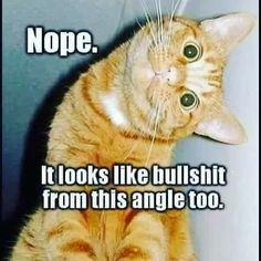36 Funny Cat Memes That Will Make You Laugh Out Loud – Funny Cat Quotes 36 lustige Katzen-Meme, die Sie laut lachen lassen – … Funny Animal Memes, Cute Funny Animals, Funny Cute, Funny Shit, Cute Cats, Funny Memes, Funny Laugh, Funny Cat Quotes, Funniest Animals
