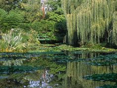 claude-monets-garden-pond-in-giverny
