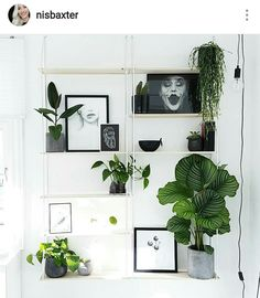 My lovely shelf from sostrene grene with a boho scandinavian urban plant twist!   Instagram :nisbaxter
