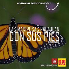 Increíble! #mariposa #butterfly #nature #naturaleza #tattoo #papillon #beautiful #flor #flores #insect #colores #love #butterflies #flower #colors #papallona #buterfly #mariposas #alas #green #color #mexico #venezuela #panamá #travelers #latinoamerica #brasil #america #life #traveler