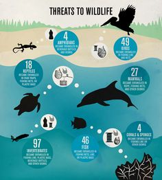 """""""Threats to Wildlife"""" — an infographic during the 2011 International Coastal Cleanup that shows the threat to wildlife on water. Students should learn how to take care and conserve bodies of water through having a traditional lecture method."""