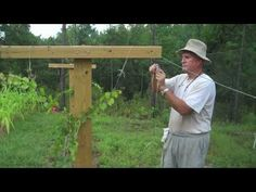 This video discusses the advantages and disadvantages of the Geneva Double Curtain training system for grapevines.
