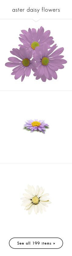 """aster daisy flowers"" by tinkertot ❤ liked on Polyvore featuring flowers, fillers, plants, backgrounds, daisy, daisies, lullabies, purple, cachorro and castelo"