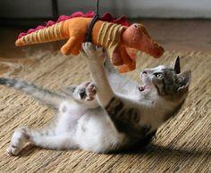 Cats vs. Dinosaurs