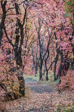 The Path ~ by Anita Burke