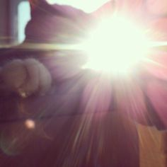 #the #sun #is #shining #and #caught #by #my #cat