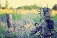 HFF! ~ the golden hour ~ | Flickr - Photo Sharing!