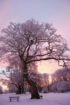 Don't Look Anywhere Else Until You Read These Great Tips About Photography. Typically, your photos neve Winter Szenen, Winter Fairy, I Love Winter, Winter Sunset, Winter Magic, Winter Trees, Winter Christmas, Winter Pictures, Cool Pictures