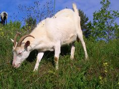 The 5 Best Livestock For Beginning Homesteaders