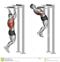 Reverse Grip Pull-ups On The Back Muscles Stock Illustration - Illustration of primarily, target: 56929805 Do Exercise, Excercise, Biceps And Triceps, Aerobics Workout, Planet Fitness Workout, Chin Up, Back Muscles, Physical Fitness, Strength Training